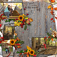 01-Autumn-in-the-Forest.jpg
