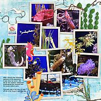 15-coral_-sea-horse-aquarium-tm-cluster-11-3.jpg