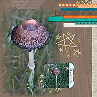 2016-09-mushroom.jpg