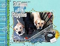 3_clean_puppies_web.jpg