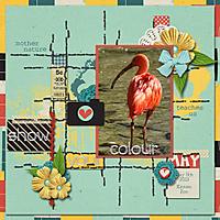 5-5_show-your-colours-web.jpg