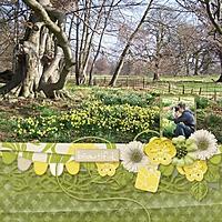 Daffodil_Spring.jpg