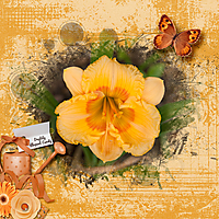 Daylily-Elegant-Candy.jpg