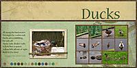 Ducks_700.jpg