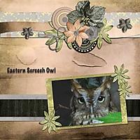 Eastern_Screech_Owl.jpg