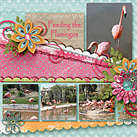 Feeding_the_Flamingos_2.jpg