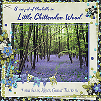 Little_Chittenden_Wood.jpg