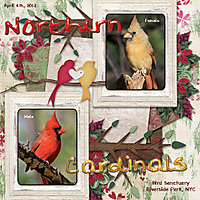 Northern-Cardinals-4-Web.jpg