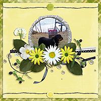 SDS_Lemongrass1.jpg