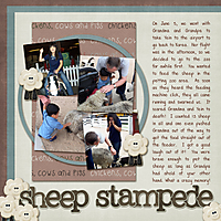 Sheep-Stampede-WEB.jpg