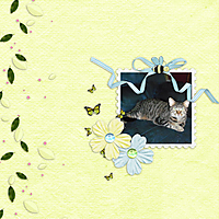Siamese-SunshineNRainbow1.jpg