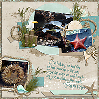 Starfish_copy.jpg