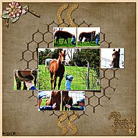 feed-the-horse.jpg
