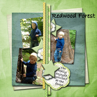 redwood-forest.jpg