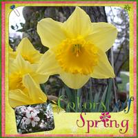 Colors-of-spring.jpg