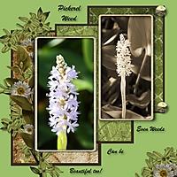 GS_Pickerel_Weed_-_Page_085.jpg