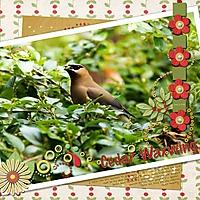 scrapbook_2012-06-09-Cedar-Waxwing.jpg