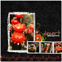 2009-05-07-Desert-Blooms.jpg