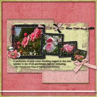 2009-05-07-Pink-roses.jpg