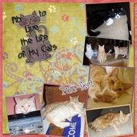 cat-Lives_edited-1.jpg