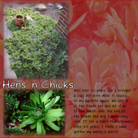 hens_nchicks_small.jpg