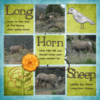 Long-Horn-Sheep.jpg