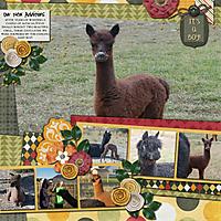 LC_alpacas.jpg