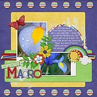 first_macros_600_x_600_.jpg