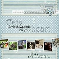 cats_miaow_.jpg