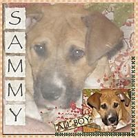 Sammy1.jpg