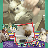 Molly_checkup_LittlePetHosp-KSS_CraftTemp_Aug2013.jpg