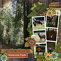 redwoods_copy.jpg