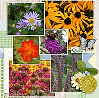 butterfly-garden2WEB.jpg