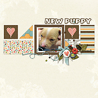 New_puppy.jpg
