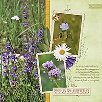 0-Wildflowers-at-Pine.jpg