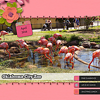 Flamingos_ScrapliftChal_GS_WEB.jpg