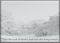 Winter15.jpg