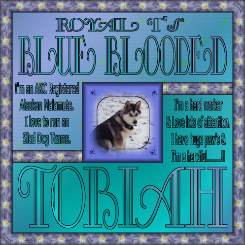 RoyalT's-BlueBlooded-Tobiah