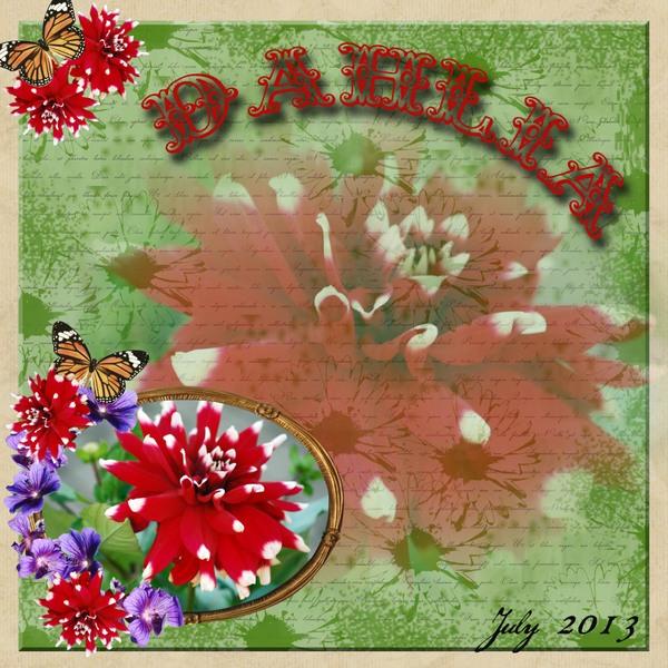 Dahlia_july_2013
