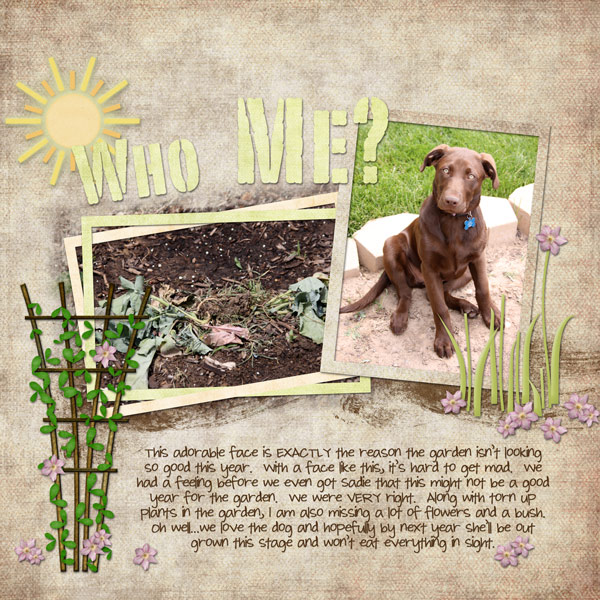 Dog-in-GardenWEB