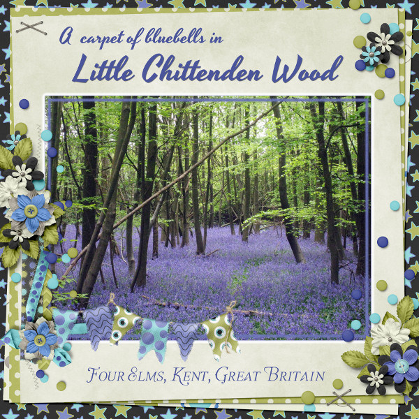 [Little_Chittenden_Wood]