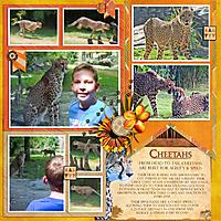 1009-Cheetah-DFD_KeepingTabs-3-copy.jpg