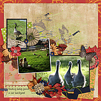 2013-5_feeding_baby_geese.jpg