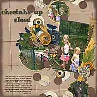 2013-9_cheetahs.jpg