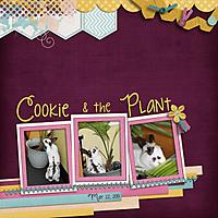 20130522-Cookie.jpg
