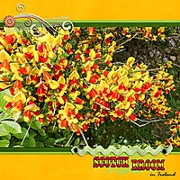 2014-08-scotch-broom.jpg