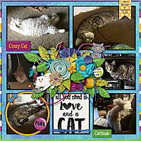 2015-03-CMG-MyPetCat_DFD-Selfie-web.jpg