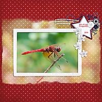 2015-07-dragonfly.jpg