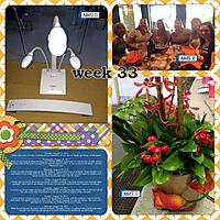 365-week-33.jpg