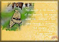ATC-2017-119-The-Butterfly.jpg